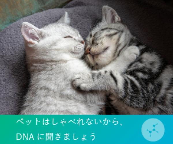ねこちゃんは喋れないからDNAに聴きましょう!