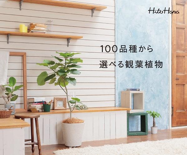 ギフトにぴったりな胡蝶蘭、観葉植物、花束、スタンド花の通販サイト【HitoHana】(その他商品)